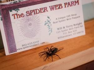 A Spider Farm Visit
