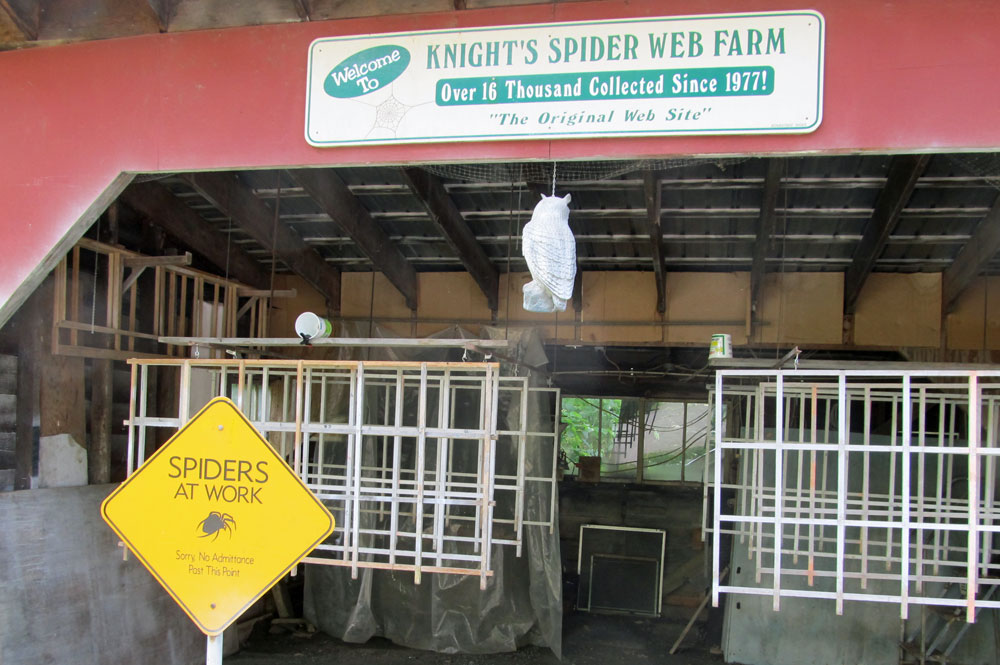 Spiders Working Here